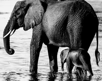 Baby Elephant Fine Art - Monochrome Animal Photography - Black and White Wildlife Home Decor - Wall Art Contemporary Photography