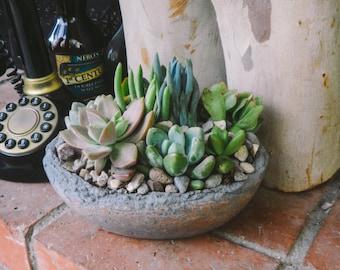 Eddies Oasis succulent living arrangement