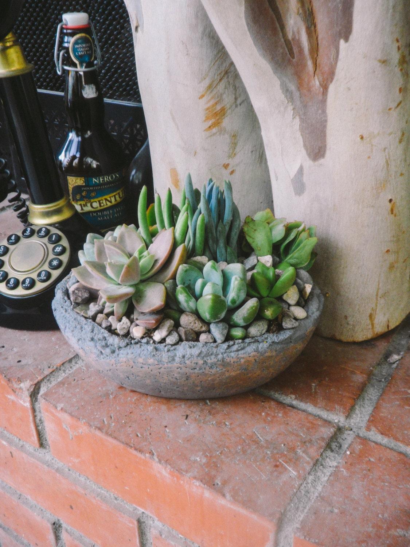 Eddies oasis succulent living arrangement Planters for succulents