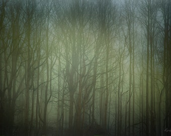 Forest Glow - Nature Photography - Surreal Dreamy Forest Trees Mist Fog Wall Art - Photograph 20x30
