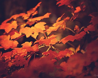 Changing - Nature Photography - Red Orange Fall Leaves - Foliage Photo - Autumn Decor - Colorful Leaves