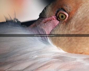 """Pale Pink """"Flamingo Eye"""" Fine Art Photograph"""