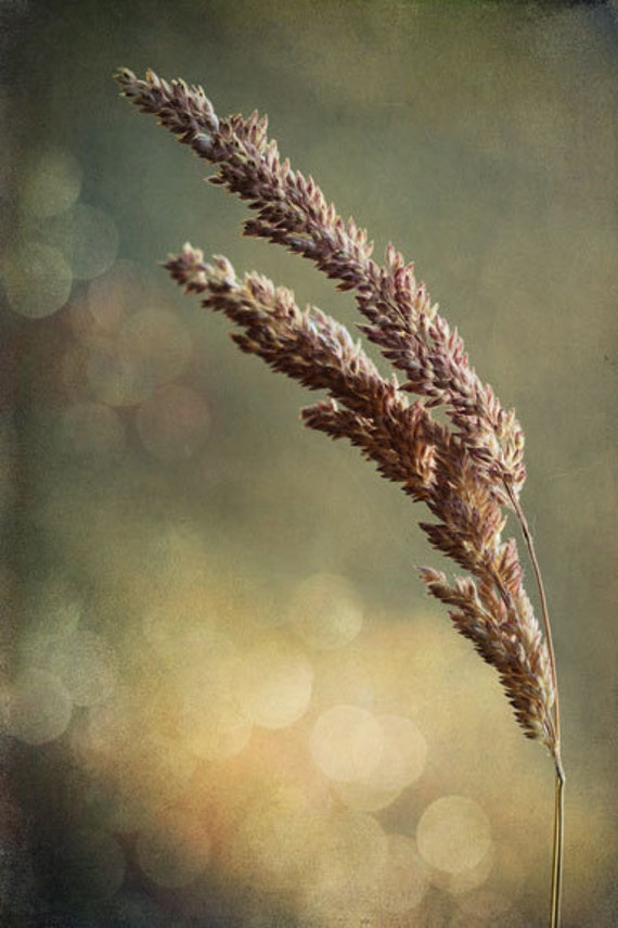 https://www.etsy.com/listing/158552259/grass-photography-bokeh-brown-purple