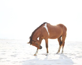 Horse on Beach Photography - Assateague Pony - Seascape - Equine - Horse Art - Assateague Island - Wild Horse Photography