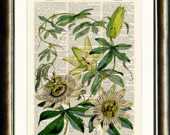 Passion Flowers Botanical print - Upcycled vintage image printed on a late 1800s Dictionary page Buy 3 get 1 FREE