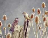wildlife card, note card, greetings cards, blank cards, wildlife art, bird art, art cards, nature cards, unique cards, sparrows and teasels