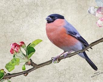 wildlife card, blank card, greetings card, birthday card, note card, thank you card, blank note card, bird note card, bird blank card
