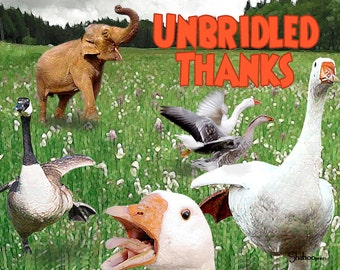 Funny Animal Blank Thank You Greeting Card: Unbridled Thanks
