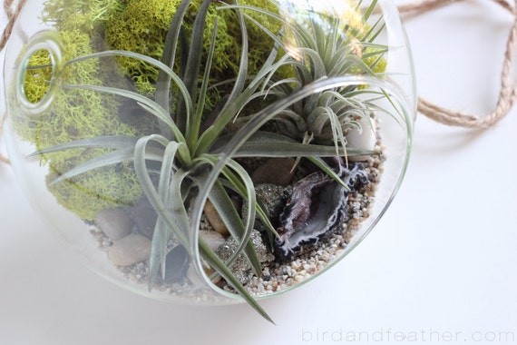 Air Plant Terrarium Kit || Geode + Pyrite || Large Hanging