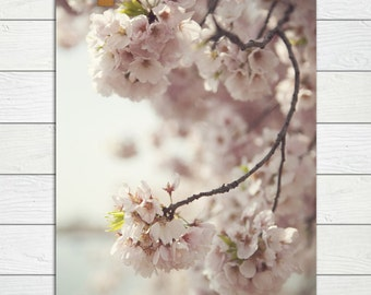 Jubilant  - Photographic Print - Pink, Cherry Blossom, Spring, nursery, baby,  Romantic, Cottage, Shabby, Home, Decor, Wall, Chic, Hanging