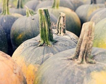 Pumpkin Patch - Photographic Print - green, orange, Fall,  Autumn, Whimsical, Country, Harvest, Art, Wall Hanging, Decor, Blue, Feminine,