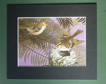 Vintage Goldcrest Print - Bird Nest - Ornithology Print - Small Garden Bird Print - Natural History Print - Nature Illustration - Bird Decor