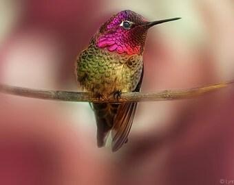 "Hummingbird Photography - pink hummingbird bird photography summer  8x10 print hummingbird photos bird wall art pink decor 16x20 - ""Wing"""
