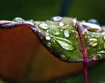 """Nature Photography - green and purple leaf  with autumn rain, green wall decor, raindrops, autumn wall decor, sparkly wall art, """"Radiance"""""""
