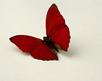 Butterfly Specimen, Red Butterfly,  Décor, Terrarium Accent, Wedding Decor, Photography Prop, DIY, Craft Supply, Creative, Nature