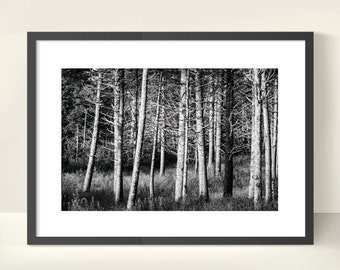Tree Trunks. Woodland. Forest. Monochrome Nature Photography. Black & White Print by OneFrameStories.
