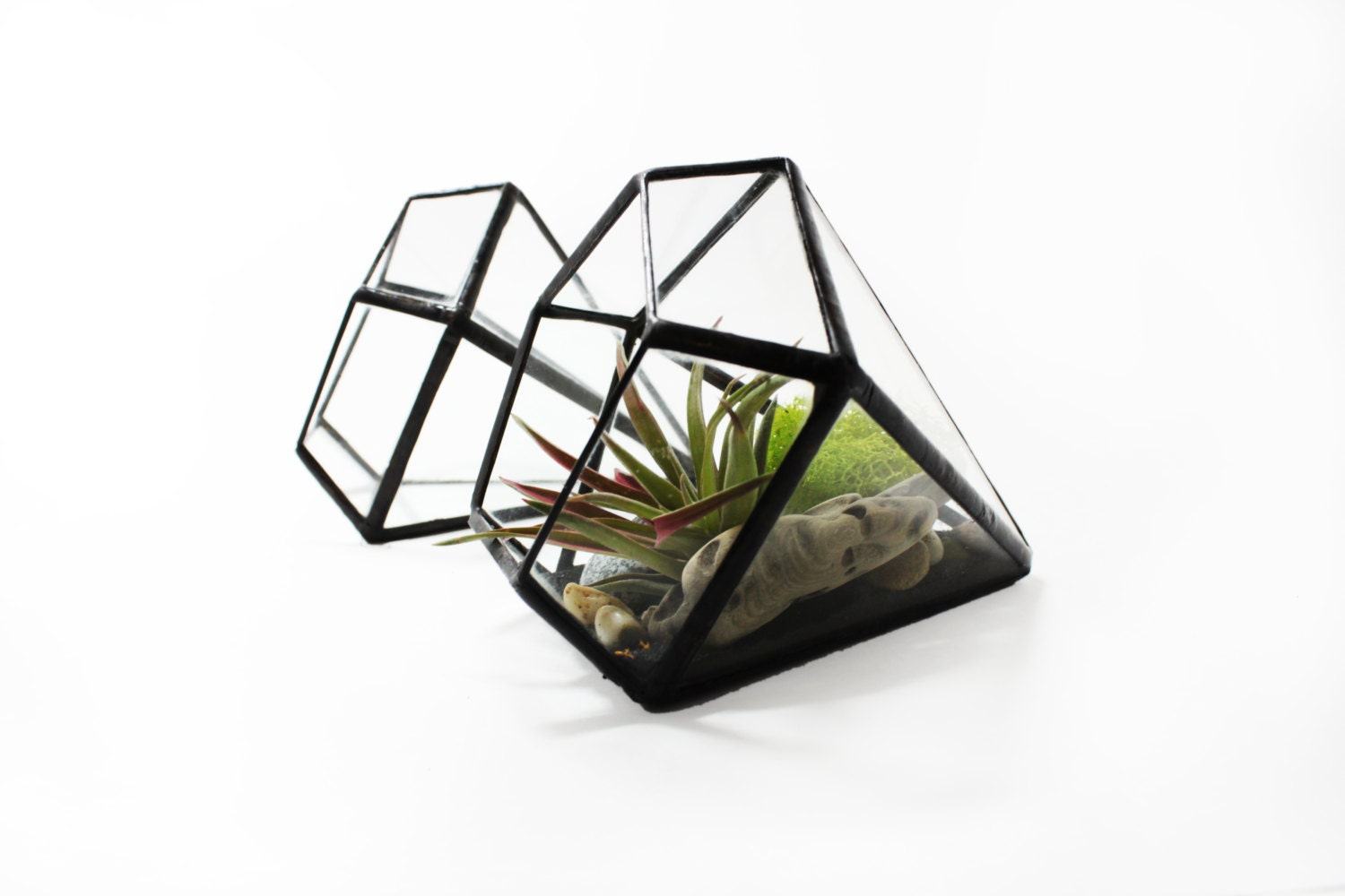 Diamond terrarium holder geometric air plant holder clear for Geometric air plant holder