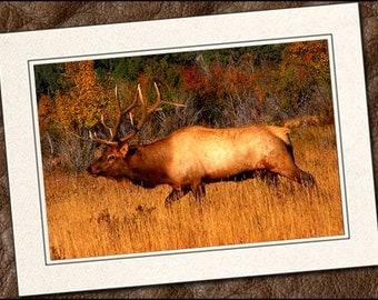 3 Elk Photo Note Cards - 5x7 Elk Note Card - Blank Wildlife Note Cards With Envelopes - Wildlife Greeting Cards Handmade (IN107)