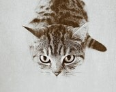 Hello Kitty, stripey kitten photography, gray silver home decor monochrome print, colour available