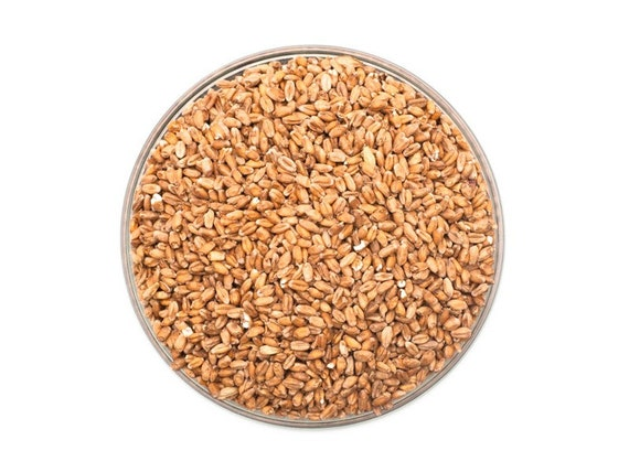 All Natural Raw Red Wheat Brewing Malt For Home Brewing 1 Pound