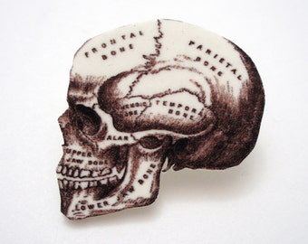 Human Skull Craniometry Brooch - Black and White  HUMORALess Skull Illustration Pin