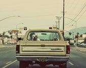 American Bulldog, Tucson Arizona, Dog In Truck, Hipster, City, Grunge - 12x12 -  Signed Fine Art Photograph - Kimberly Kling