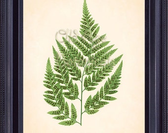 Fern Print Lowe 8x10 Botanical Vintage Antique Art Plate ASPIDIUM CAPENSE Green Plant Nature Botany Interior Design Home Decoration  FC0302