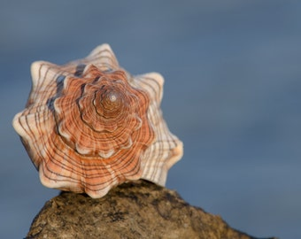 Nature photography, sea photography, shell photography