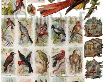 Birds Number 7 Digital Download Collage Sheet