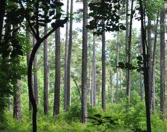 Peaceful Trees Scene In North Carolina Park