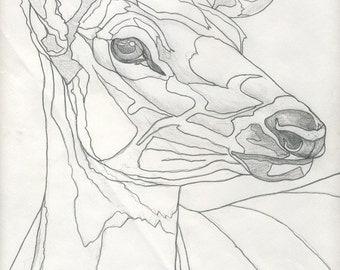 American Elk Pencil Study - Original Wildlife Drawing by Darin Miller