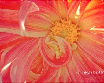 Red and Yellow Dahlia Macro Flower Photography - Fine Art Photography