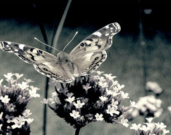 Butterfly Black and White Photography Art Print