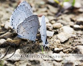 Instant Download Stock Photo-Four Butterflies-Macro Nature Photography - DoucetteDesign