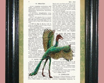 Archaeopteryx Feathered Bird Dinosaur Dictionary Page Art Page Art Prin Dictionary Print Upcycled Page Art cp475
