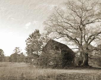 Old Barn and Tree