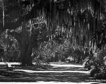 Bench in Trees, Savannah GA