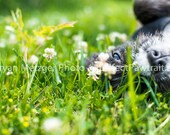 Flower Field Dog eyes Profile Portrait Print, Fine Art Photography Print, Purrfect Pawtrait Pet Photography, Animal Photography - PurrfectPawtrait
