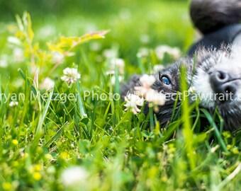 Flower Field Dog eyes Profile Portrait Print, Fine Art Photography Print, Purrfect Pawtrait Pet Photography, Animal Photography