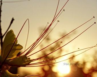 flower macro sunset photography