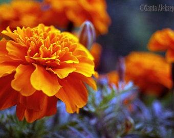 Blossoming flower- Fine Art Photography - Digital photography download, instant download, flower photography, nature photography, Wall decor