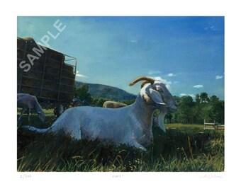 "12x16 Limited Edition Print ""Albie"" The Goat Sanctuary Animals Series Vegan Art"