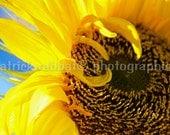 Sunflower Photo Fine Art Photography Flower Macro Close-Up Sunflower Yellow Sunny Blue Sky Light Cheery Colorful