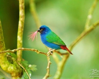 Nature Photography Print, Landscape Photo, Nature Wall Art, Green Blue Red, Bird Photograph, Outdoor Picture