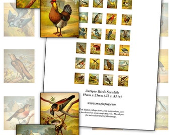 Antique Colorful Birds scrabble digital collage sheet 19mm x 21mm .75 x .83in