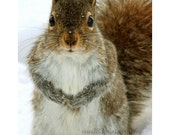 CLEARANCE Squirrel, Woodland Animal Photography, Nature, Squirrel Photo, Brown, Grey, White, Winter, Cute- 4x6 inch Print -You Talkin to Me