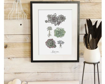 Sempervivum - Succulent Scientific illustration. Beautifully textured cotton canvas art print. Order as an 8x10 11x14 or 16x20 size.
