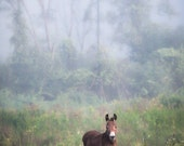 August Morning Dreamy Color Photograph, Rustic Landscape, Animal, Nature Photography, Donkey, Horse, Original Signed Print, Free Shipping