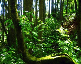 Mossy Tree Green Ferns Woods Enchanted Forest Fine Art Photography Oregon Columbia River Greeting Card DEFYING GRAVITY by Spinning Castle