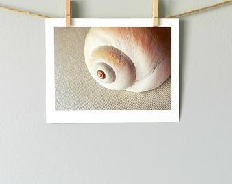 Nature Photography, Sea Shell Home Decor, Coastal Art, Natural Home, Seashore Art, Nautical Home Decor, Seashell Art Print, 5x7 Wall Decor